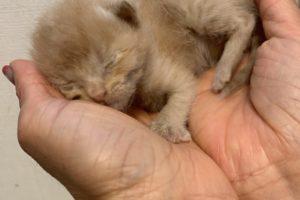 子猫を保護しました。(6月2日)